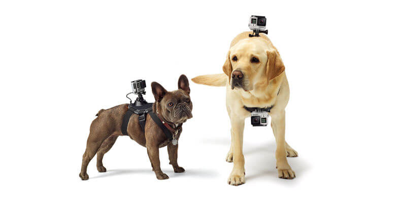 GoPro Fetch - Pets Mounts
